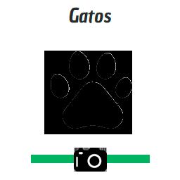 icono-gato1tit
